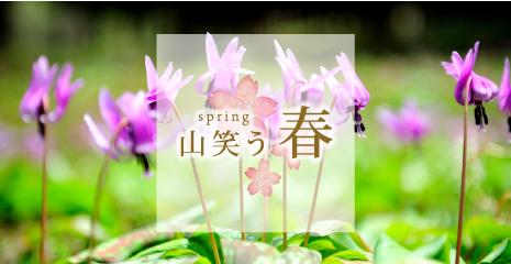 banner-haru