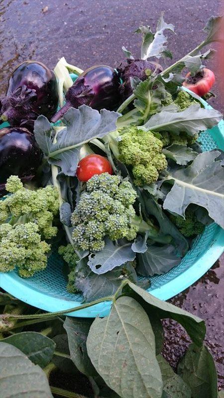 R_野菜2