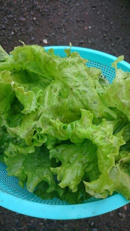 R_野菜1
