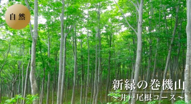 shinryoku-makihatayama-top