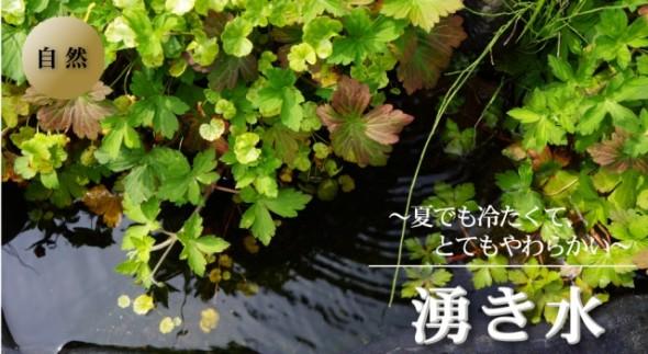 wakimizu-top[1]